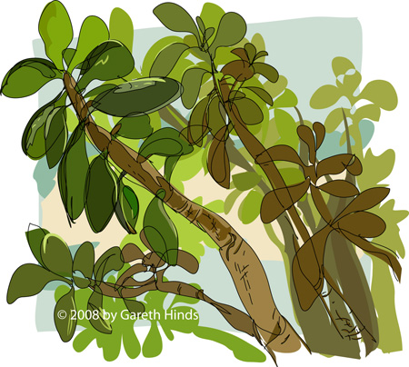Jade plant (vector drawing)
