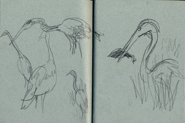 Great Blue Heron in Mt Auburn Sketch by Gareth Hinds